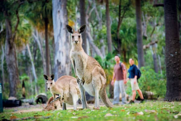 123665 2 Tourism And Events Queensland Carnarvon Gorge