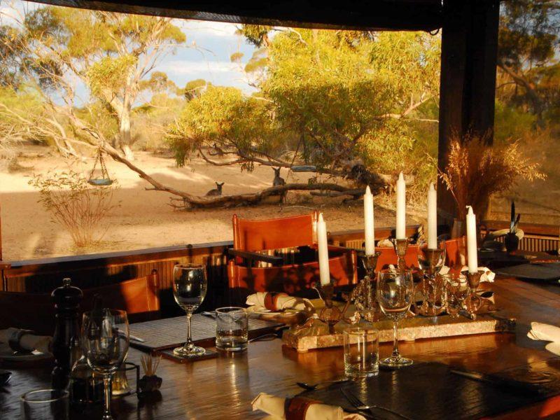 Dining Room With Kangaroos In Back Ground Kirkhope Aviation Kangaluna And Gawler Ranges