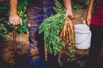 Hand Holding Carrots KILT 2018