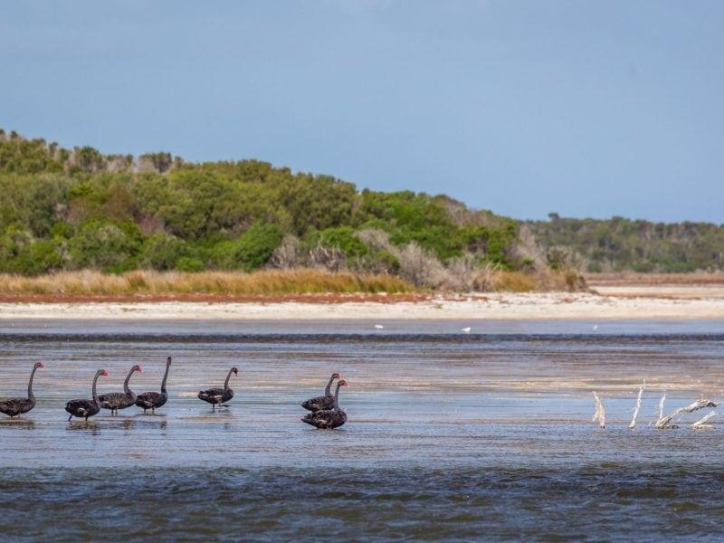 Flinders Island Wetlands Dietmar Kahles
