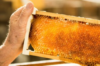 Honeycomb Photo By Exceptional Kangaroo Island