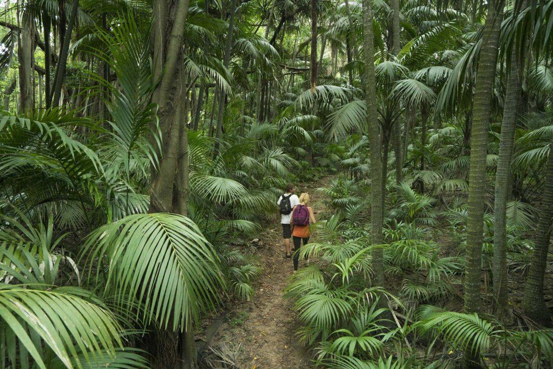 Arajilla Rainforest Photo By Arajilla