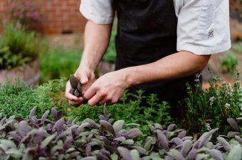Brown Brothers Kitchen Garden Sm
