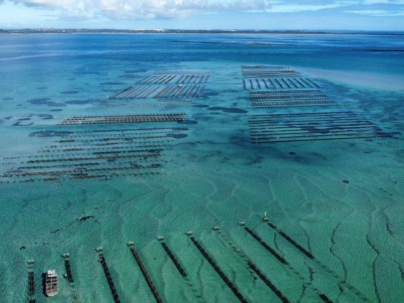 Coffin Bay Oyster Fields