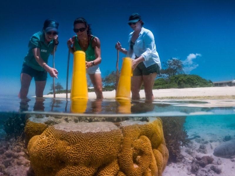 Coral Walk Lady Elliot Island