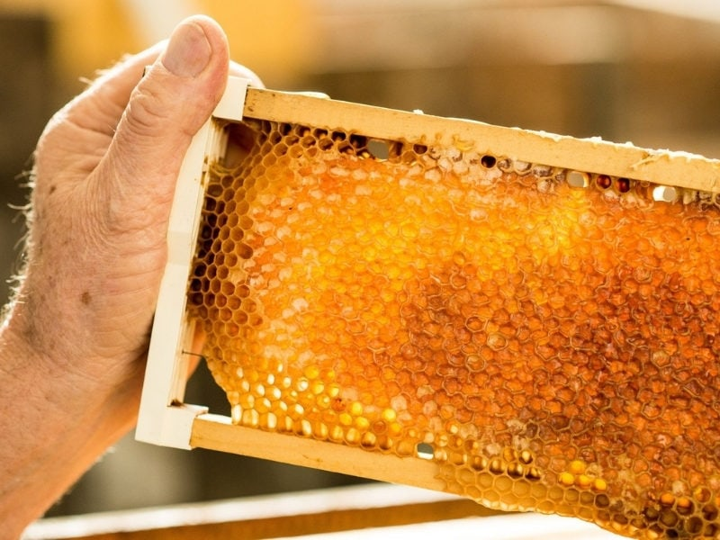 Honeycomb CR Exceptional KI Tours