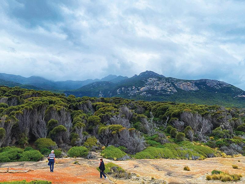 Mt Strzelecki