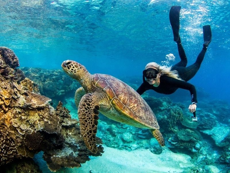 Snorkeling Lady Elliot Island